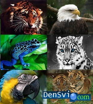 Wallpapers - Animals