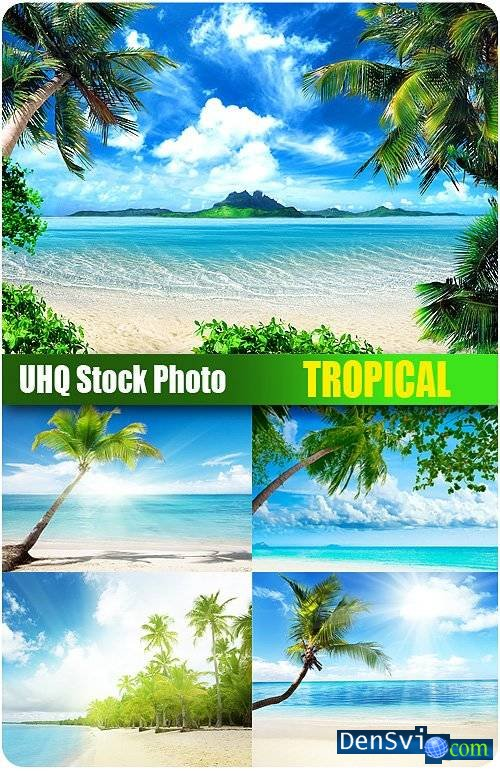 ���������� ��������� ������� - ������� - Stock Photo - Tropical