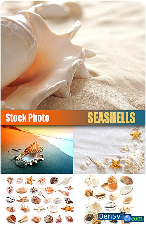 UHQ Stock Photo - ������� ������� - Seashells