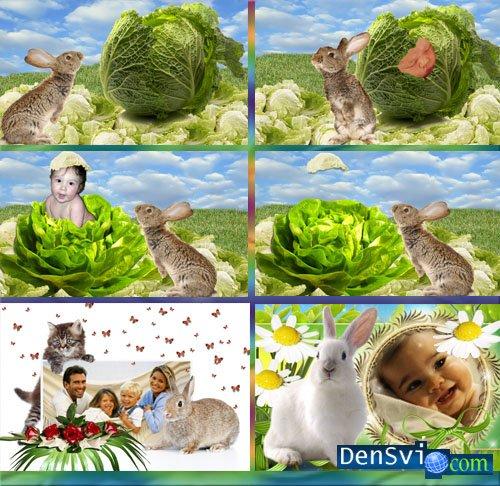 Шаблоны рамки фотошоп год кролика
