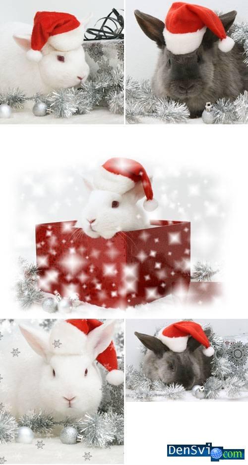 Клипарт новогодние кролик кот