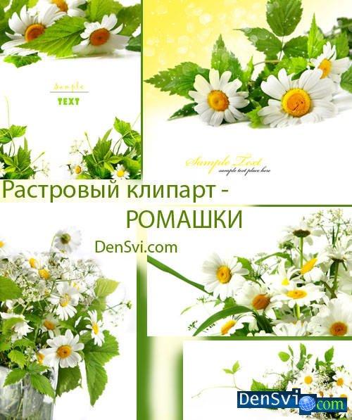 Цветочные фоны для фотошопа ромашки