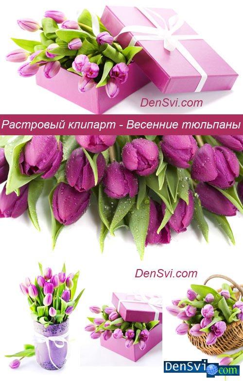 тюльпаны клипарт: