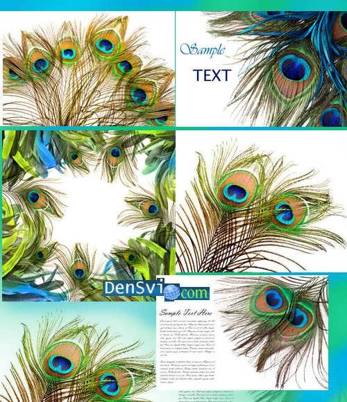 Роскошные фоны павлиньи перья