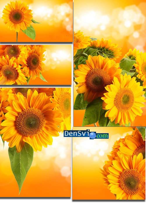 Винтажные цветочные фоны фотошоп