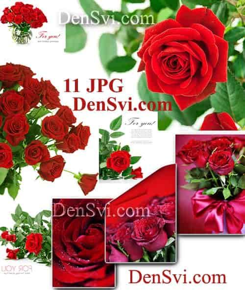 Цветочные букеты фоны фотошопа