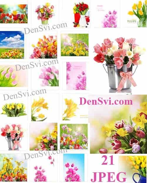 Тюльпаны - Цветные фоны Фотошоп