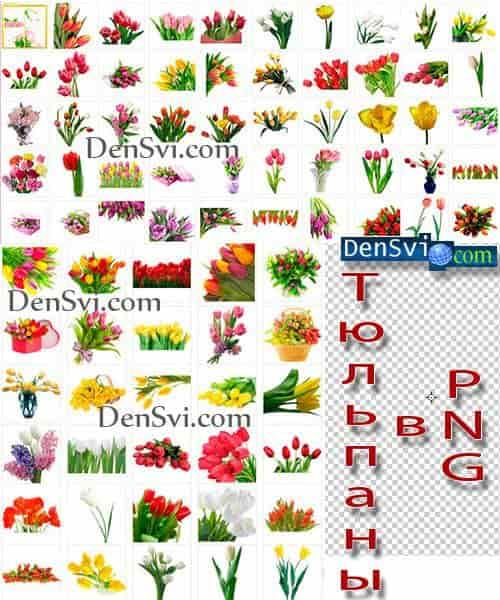Тюльпаны - фон прозрачный - мега коллекция