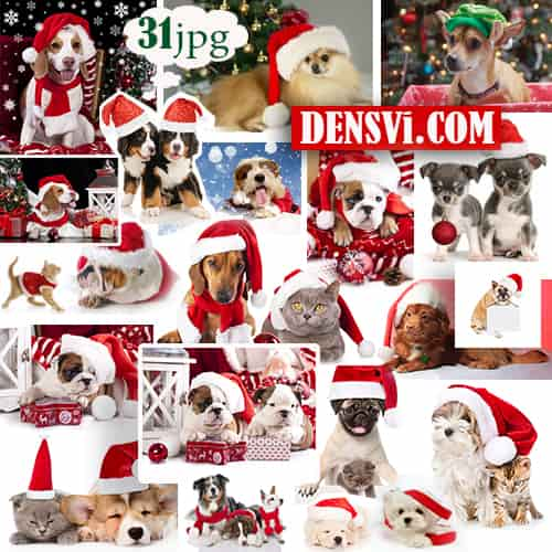 Собаки - Новый год - 31 HQ jpg. Christmas dog raster free